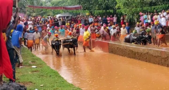 Kambala